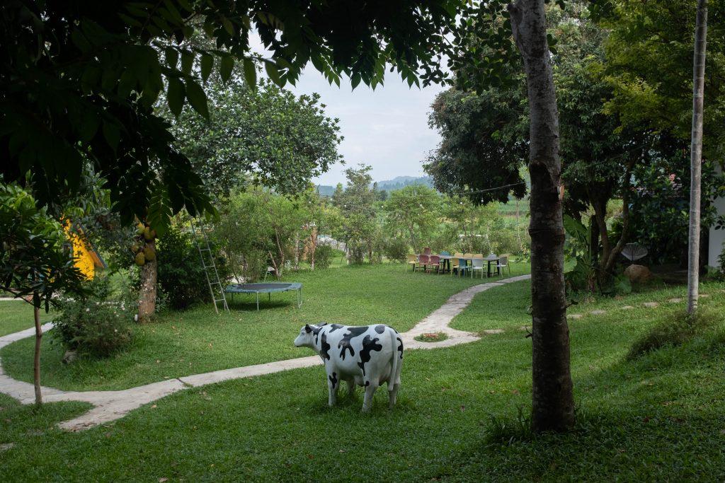 A random cow